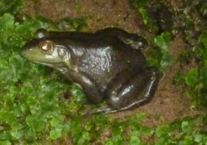 closeupfrog